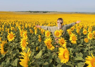 Sunflower Field. Credit North Dakota Tourism