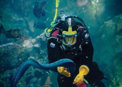 photos_Seattle-Aquarium-Diver-Window