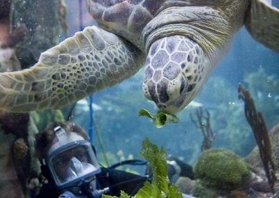 photos_VAP_citypass_chicago_il_Shedd_Turtle_Feeding