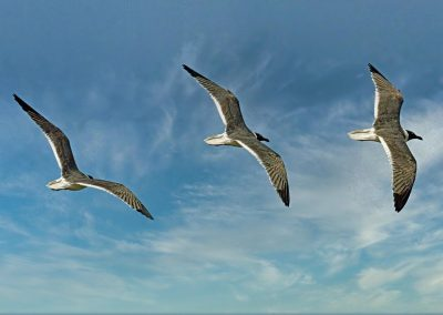 seagull-5272734_1920